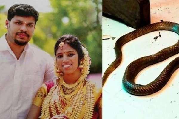 В Індії чоловік вбив свою дружину коброю заради автомобіля