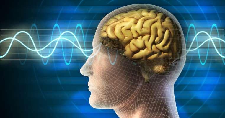 Поживні речовини, які найбільше потребує мозок