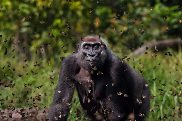 Фотоконкурс Nature Conservancy 2021: найкращі знімки дикої природи