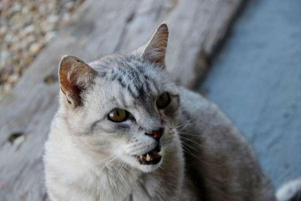 В Тернопольской области бешеная кошка покусала людей