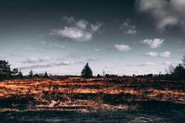 В Україні заборонили випалювати суху траву