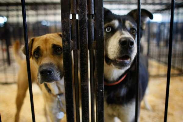 В Виннице прошла ярмарка бездомных животных