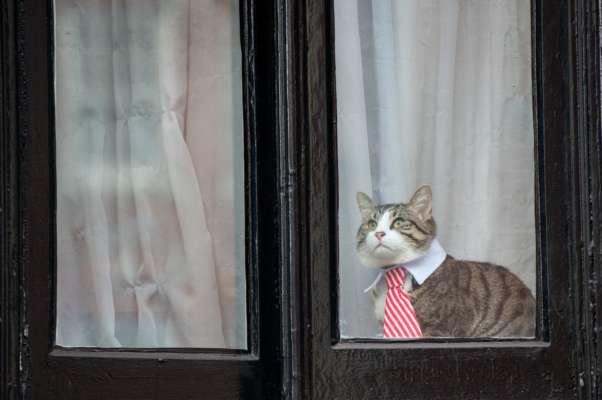 В Австралии всех кошек заключили под домашний арест