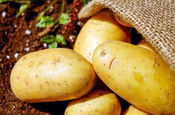 Науковці назвали лікувальні властивості картоплі