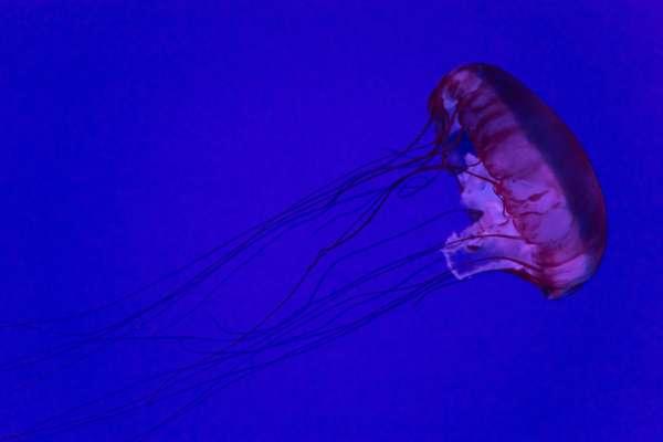 Ученые создали искусственную медузу