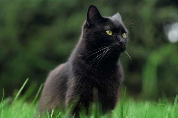 кіт вистрибнув з вікна п'ятого поверху і пішов гуляти
