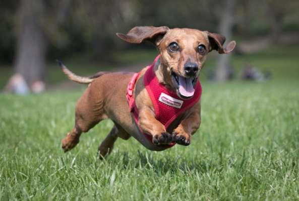 Не все так просто: вчені розповіли, що виляння хвостом у собак означає не лише щастя