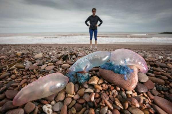 Вчені назвали, чому в Азовському морі так багато медуз