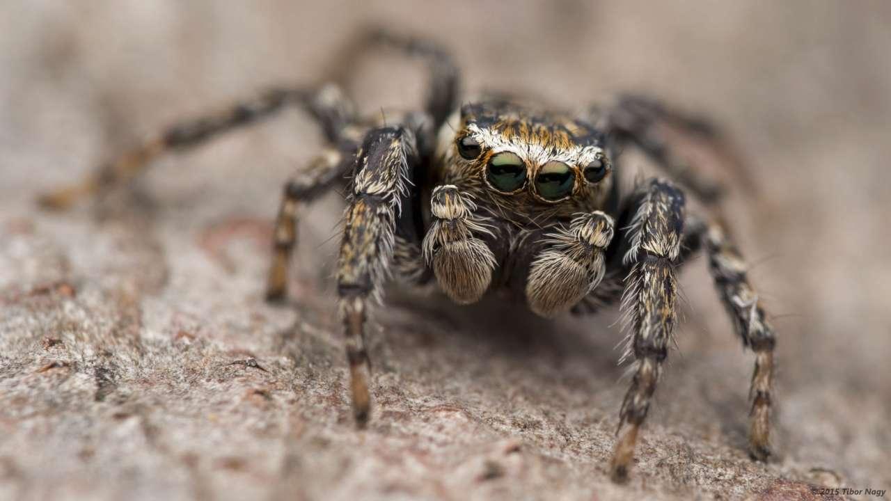 Тисячі павуків ховаються в будинках австралійців через масштабні повені