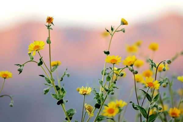 У парках Дніпра розквітли мавританські газони