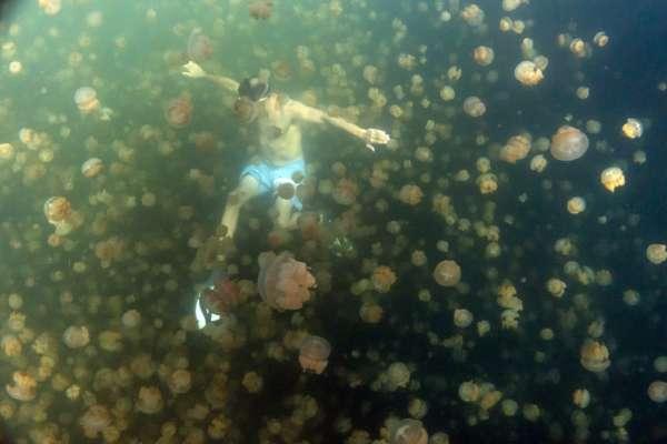 У Запорізькій області відпочивальниця пляжу провалилася у яму з медузами