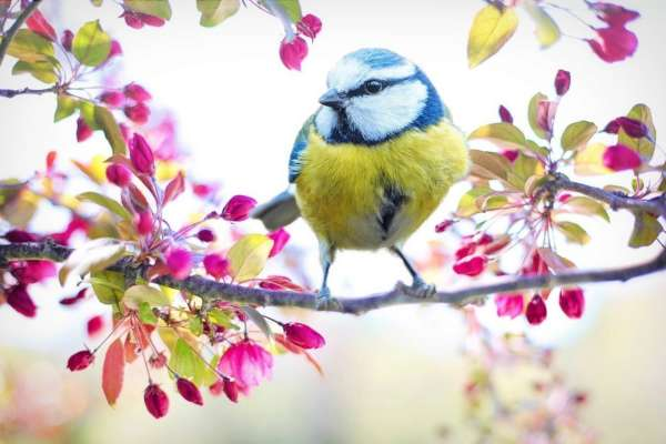 Яка погода очікує українців у березні