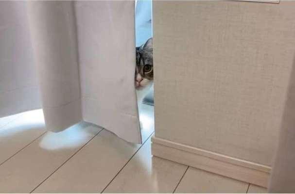 В Японії кіт встановив світовий рекорд