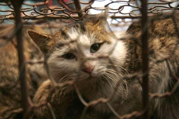 як допомогти безпритульним тваринам