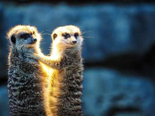 У Німеччині чоловік купив дітям понад 30 тис. квитків у зоопарк