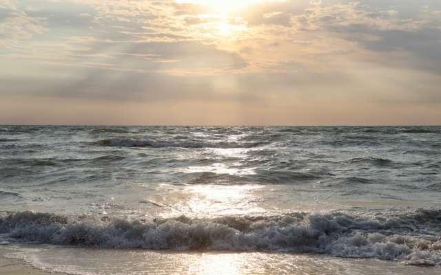 На Азовском море — нашествие морских блох: ракообразные не дают туристам купаться