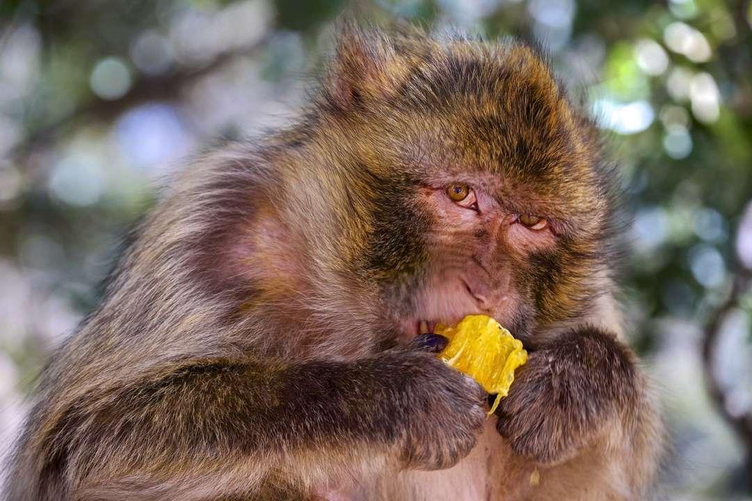 Восстание планеты обезьян: Neuralink показали видео, где макака играет в видеоигру силой мысли
