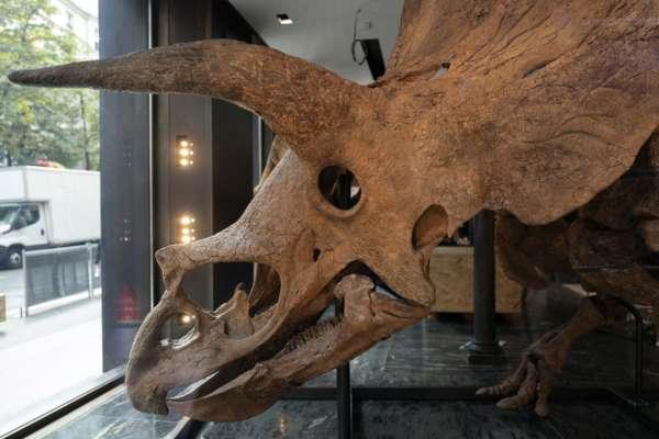 Во Франции на аукцион выставили уникальный скелет динозавра