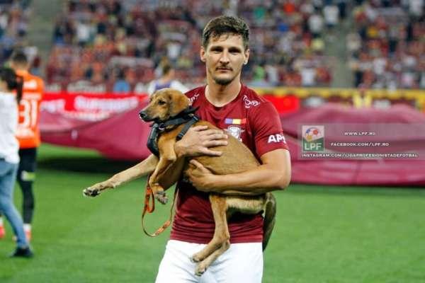 У Румунії футболісти перед матчем виходять на поле з собаками, яким шукають господарів