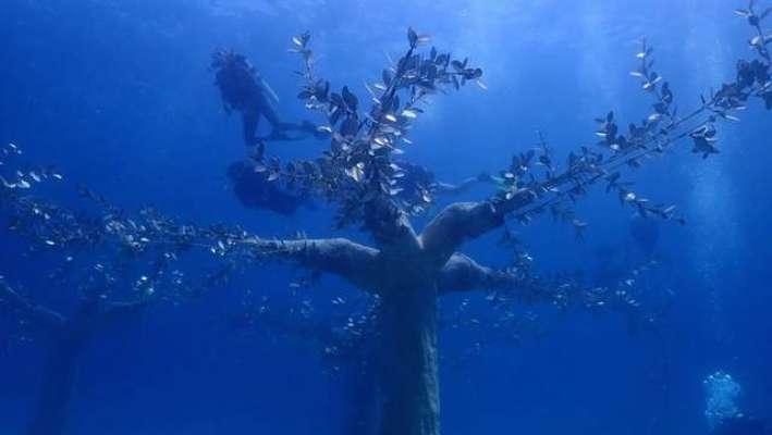 Сказочный подводный мир: на Кипре открыли музей с экспозицией на морском дне. Фото