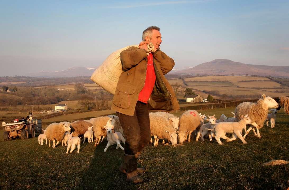правительство Великобритании мотивирует фермеров выходить на пенсию