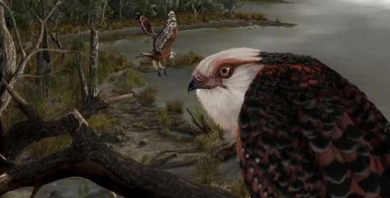 Археологи знайшли скам'янілості найдавнішою хижого птаха