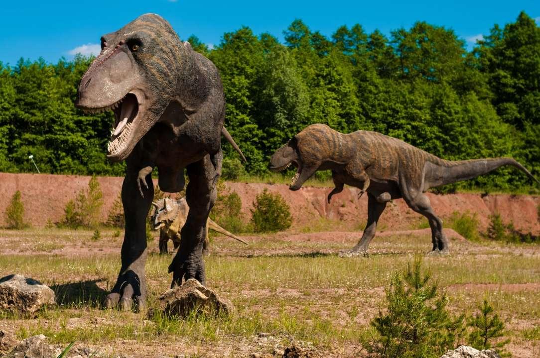 ФОТО. У Китаї знайшли слід маленького стегозавра, який жив мільйони років тому