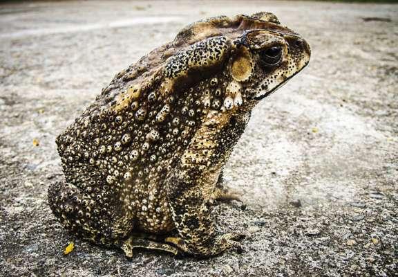 У Таллінні закрили одну із головних автомагістралей заради жаб