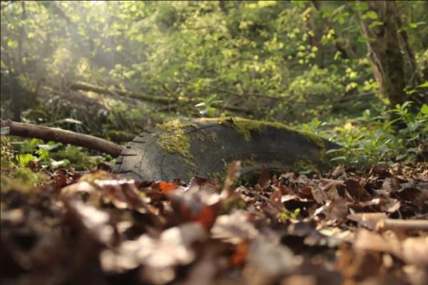 Королевское биологическое общество Великобритании выбрало лучшие снимки природы. Фото