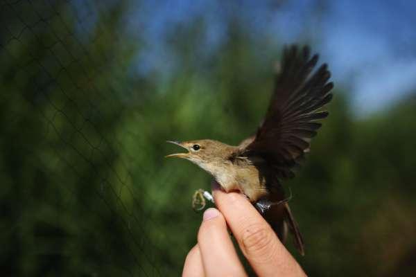 У Чорнобилі помітили птицю-примару