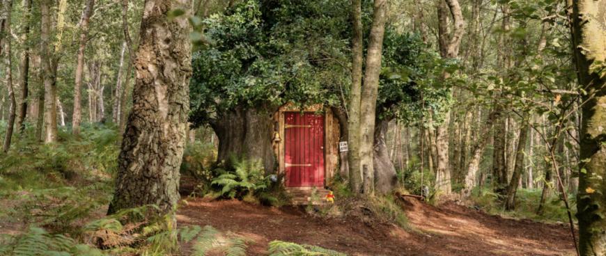 Disney створила будиночок Вінні-Пуха, який можна орендувати