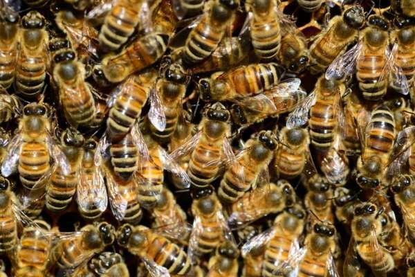 В Боливии во время футбольного матча игроков покусали пчелы. Видео