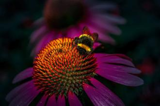 Видання National Geographic опублікувало роботи переможців фотоконкурсу для мандрівників
