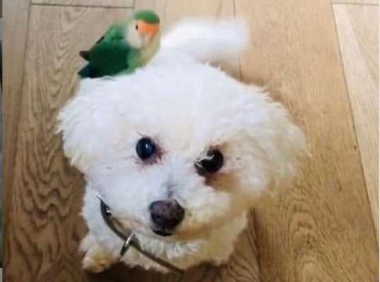 Пес та папуга