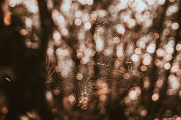 Паучья симфония: ученым удалось воссоздать звучание паутины