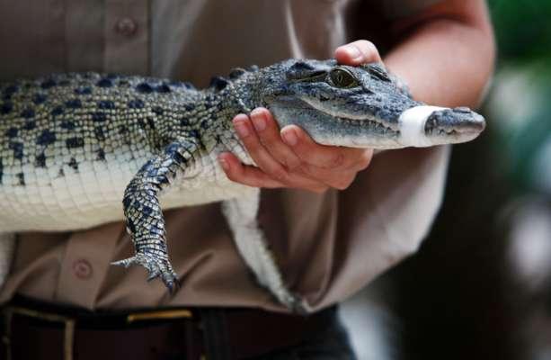 Замовлена в інтернет-магазині рибка виявилася крокодилом