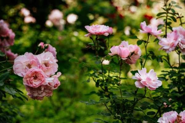 Девушка регулярно находила на своем крыльце цветы