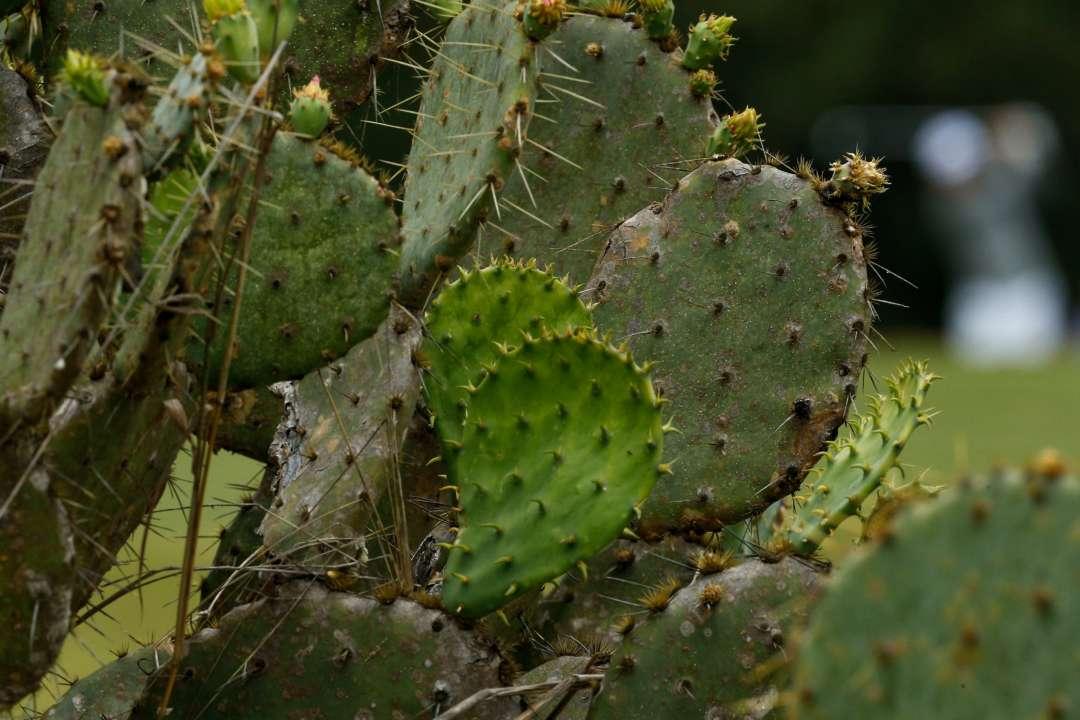 У лісах Херсона виросли кактуси