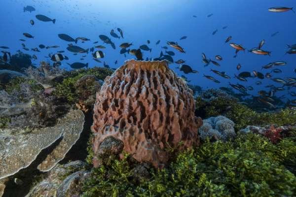 Ученые нашли следы одного из первых животных на Земле