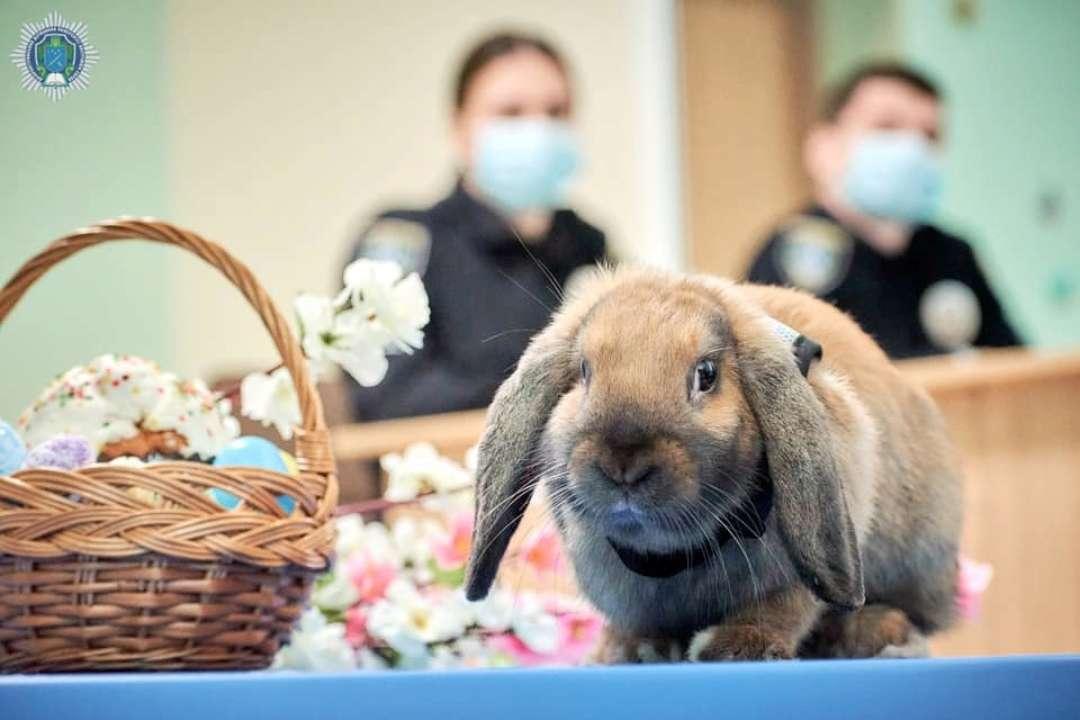 Милота дня. Кролик-полицейский провел инспекцию готовности к пасхальным праздникам. Видео