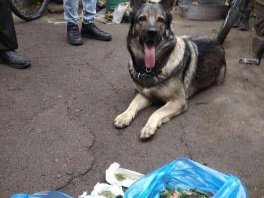 Четырехлапый блюститель закона. Служебная собака в двух жителей Полтавской области выявила наркотики