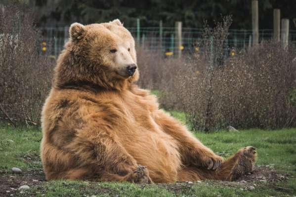 Принца Лихтенштейна подозревают в убийстве крупнейшего медведя Евросоюза