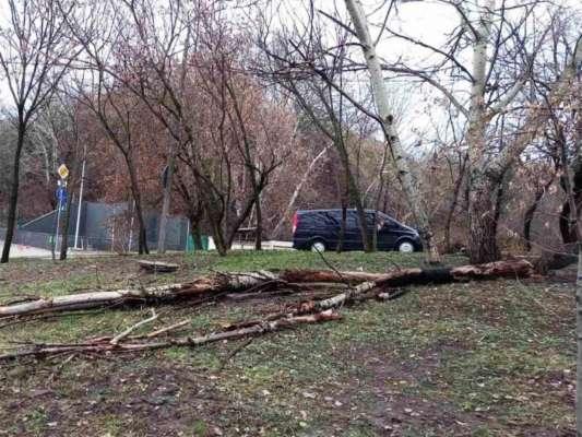 В столиці півсотні дерев пошкодив шквальний вітер