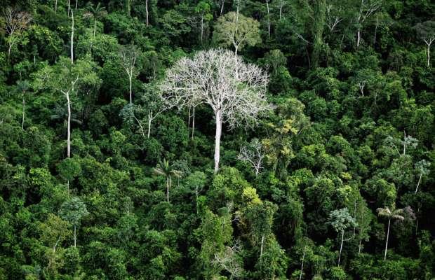 ООН передала Африці $ 17 млн за захист тропічних лісів