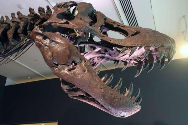 Ученые разгадали тайну, где на самом деле жили и размножались динозавры