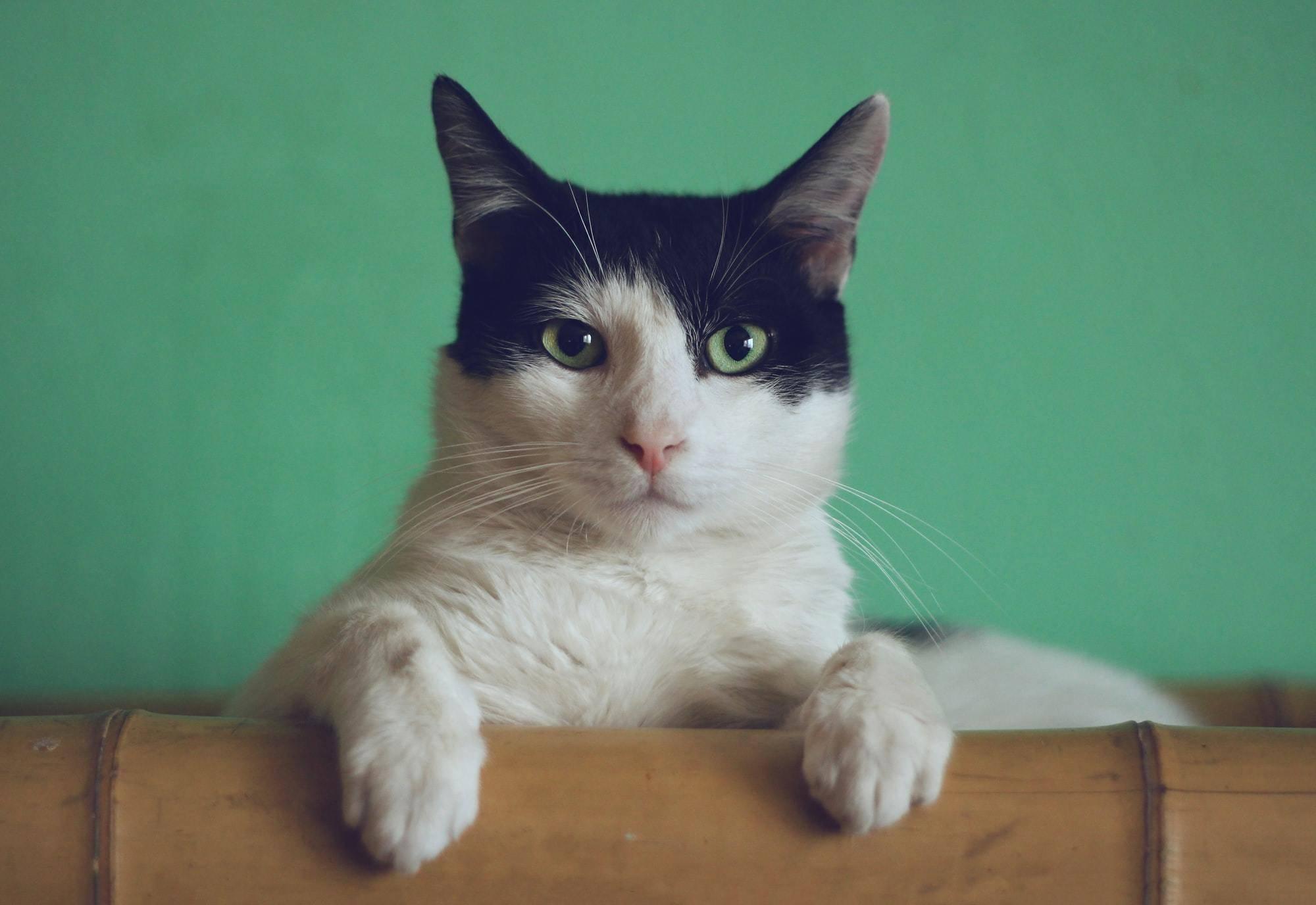 Після десяти років пошуків кіт знайшов своїх господарів