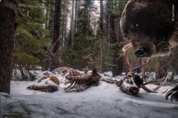 Wildlife photographer of the year: впечатляющие снимки природы от победителей фотоконкурса