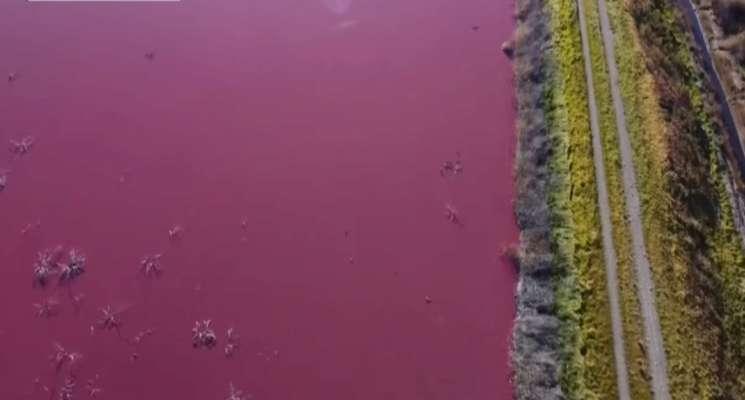 Це не природне явище: в Аргентині вода в лагуні забарвилася у яскраво рожевий колір. Відео