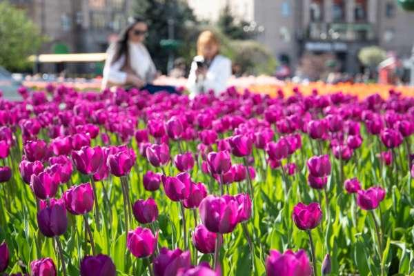 Дух захоплює: у центрі Києва розквітнули 100 тисяч нідерландських тюльпанів